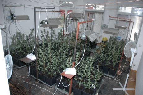 festnahme cannabis plantage mitten in siegen entdeckt wirsiegen das siegerland portal. Black Bedroom Furniture Sets. Home Design Ideas