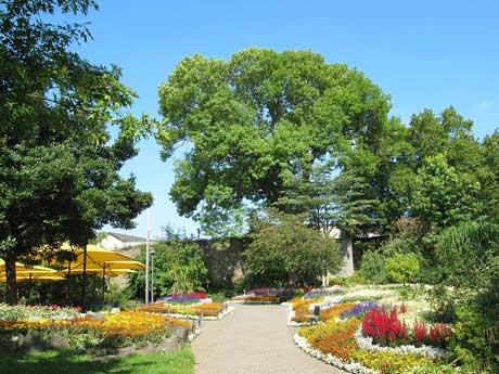 2_Schlossgarten_Sommerbepfl