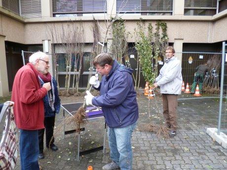 """Bäumchen wechsel dich: 352 junge Obstbäumchen wurden jetzt am Rathaus Geisweid an die Vorbesteller ausgegeben. Mit der Aktion möchte die Umweltabteilung dazu beitragen, dass der ökologisch wertvolle Lebensraum """"Obstwiese"""" im Stadtgebiet erhalten bleibt. Fotos: Stadt"""