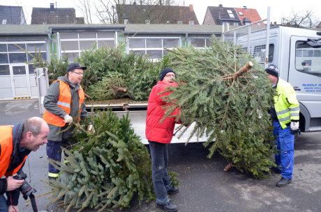 Rund 1000 Bäume konnten in Weidenau eingesammelt werden.