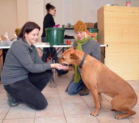 Haustierhilfe