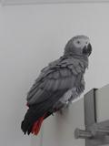 PapageiB_bearbeitet-1