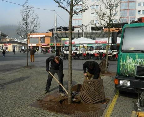 Umpflanzung_Stadtbirnen