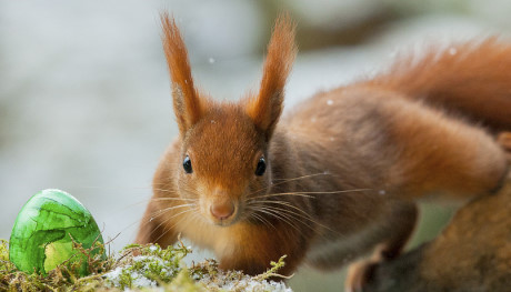 Das Eichhörnchen half dem Osterhausen in diesem Jahr beim Verteilen der bunten Eier. Foto: Siegbert Werner