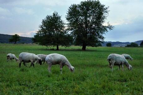2014-07-10_Niederdresselndorf_Wanderschaefer_Blitzeinschlag_Hercher_3