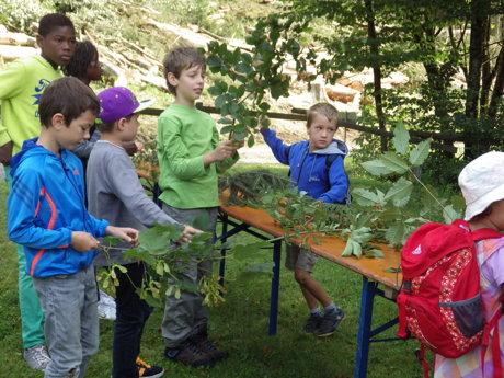 2014-08-18_Ferienspiele_Foto_StadtBad_Berleburg_Waldschule