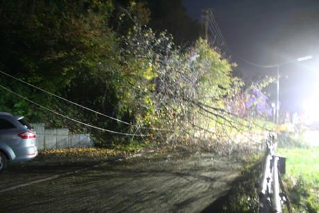 2014-10-09 Baum umgestürzt Eckmannshausen (5)