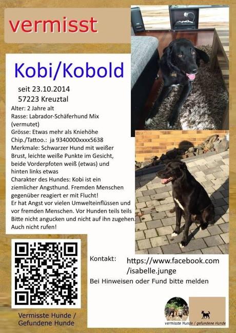 hund kobi wird in kredenbach vermisst bitte um mithilfe wirsiegen das siegerland portal. Black Bedroom Furniture Sets. Home Design Ideas