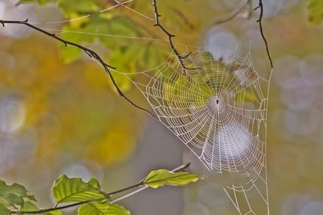 2014-11-23_Herbstliche_Impressionen_SpinnennetzvorBuchenherbstlaub_Foto_Helmut Weller