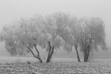 2014-12-11_01-Reif_Foto_Helmut_Weller