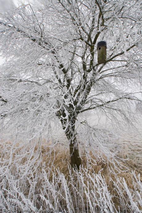 2014-12-11_02-Reif_Foto_Siegbert Werner