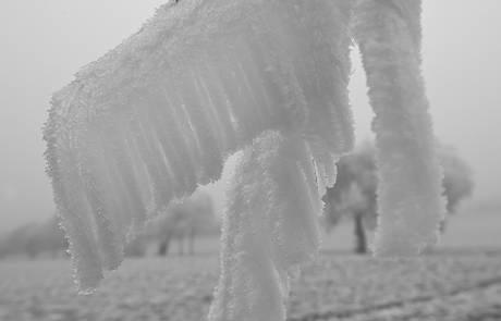 2014-12-11_06-Reif_Foto_Helmut_Weller