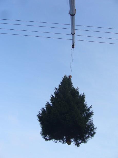 8_1_Weihnachtsbaum_am_Haken