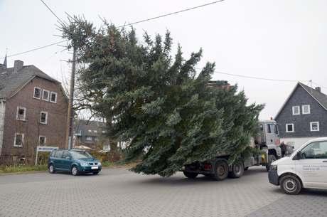 Weihn-Baum-Netph11