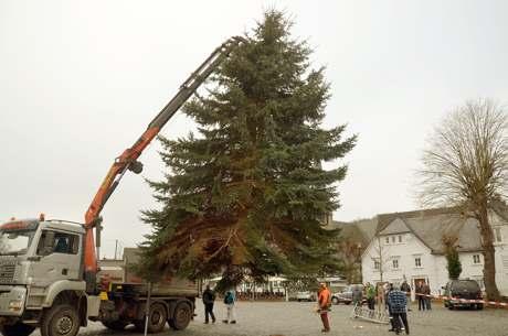 Weihn-Baum-Netph14