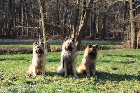 2015-03-04_Siegen_Messe_Hund_und_Heimtier_Foto_Joko_01