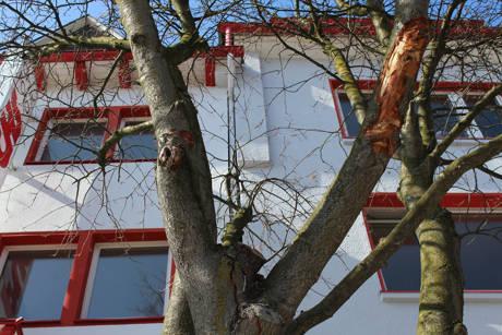 2015_-04-09_Siegen_Beschädigte Mehlbeere Oberstadt_Foto_Stadt_Siegen_02
