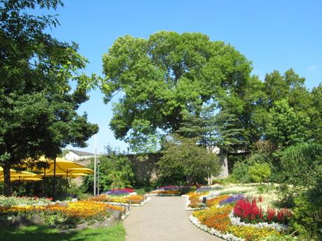 """""""Siegen blüht auf"""" am Tag der Gärten und Parks. (Foto: Stadt Siegen)"""