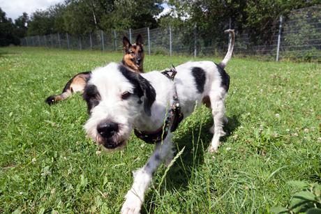 2015-07-21_Siegen_Tierheim_Hund Peter_Foto_Micha8