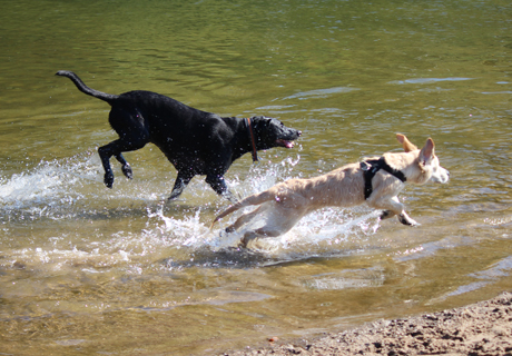 2015-10-03_Hundeschwimmen_Freibad_Müsen (68)