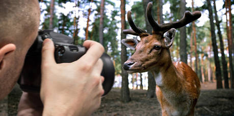 Fotopirsch auf einen Hirsch: Bis zu 5.000 Euro könnte einen Eschenburger Naturlichtbildner die Aufnahme eines Geweihten in einem Eigenjagdrevier des Rentamtes Wittgenstein kosten. Ein teurer Schnappschuss! Foto: Pixabay