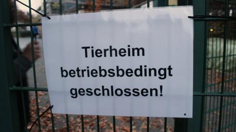 2015-11-04_Siegen_Tierheim_Frau will Hunde zurück_Foto_Hercher_2