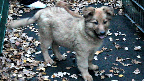 2015-11-04_Siegen_Tierheim_Frau will Hunde zurück_Foto_Hercher_4