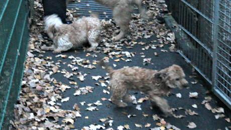 2015-11-04_Siegen_Tierheim_Frau will Hunde zurück_Foto_Hercher_5