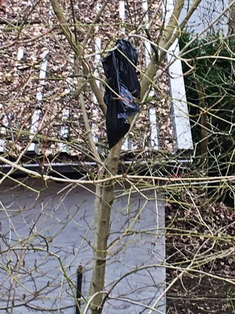 Ein seltsamer Sport: Bis in den Baum hat ein Hundebesitzer den Beutel mit den Ausscheidungen seines Vierbeiners geworfen.