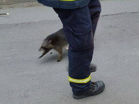 2016-03-20_Bad Laasphe-Sassmannshausen_Waschbären im Kamin Feuerwehr leistet Hilfe_Foto_Feuerwehr_01