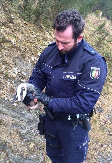 Die Beamten der Polizeiwache in Bad Berleburg retteten ein Dachsbaby, dessen Mutter nach einem Wildunfall verstarb. Fotos (2): Polizei