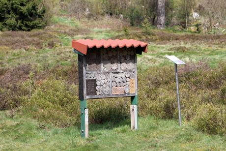 Altenberg8