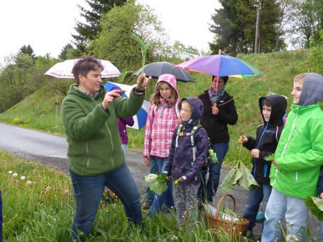 Cornelia Roggenkamp, Wildkräuterpädagogin aus Erndtebrück, zeigt anschaulich essbare Pflanzen am Wegesrand, zum Beispiel den Wiesenknöterich. (Foto: Biologische Station)