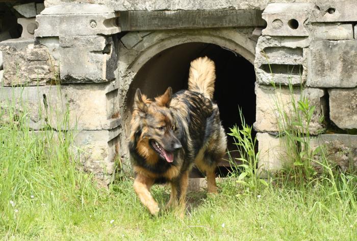 """Die Hunde lernen selbstständig zu suchen. """"Gemma"""" war im Kanalrohr und hat nachgeschaut ob dort jemand ist."""