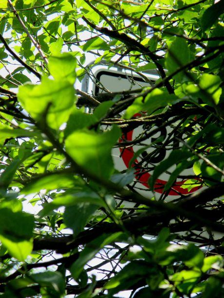 Dringender Handlungsbedarf: mancherorts ragen Äste und Sträucher in den Verkehrsraum oder verdecken Straßenschilder. Foto: Gemeinde Wilnsdorf