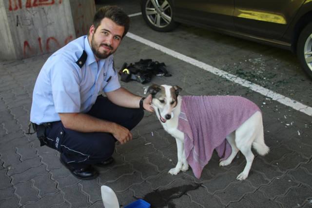 2016-06-24_Siegen_Polizei rettet Hund aus überhitztem Auto_Foto_Polizei_01