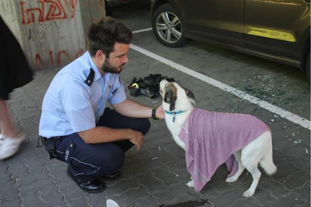 2016-06-24_Siegen_Polizei rettet Hund aus überhitztem Auto_Foto_Polizei_02