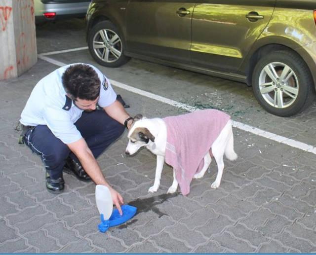 2016-06-24_Siegen_Polizei rettet Hund aus überhitztem Auto_Foto_Polizei_03