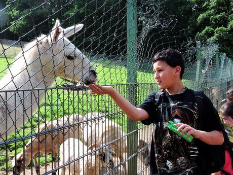 Luchse, Lamas und Greifvögel gab es für die Kinder des städtischen Kinder- und Jugendtreffs Westhang jetzt bei einem Ausflug in den Tierpark in Niederfischbach zu sehen. Foto:Stadt Siegen