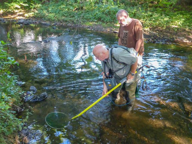 Mitglieder der Fischereigenossenschaft Kreuztal beim Elektrofischen in der Ferndorf. (Foto: Michael Frede)
